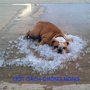 Thị trường máy lạnh các máy giải nhiệt làm mát mùa nắng nóng
